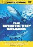Shark Attack - The White Tip Shark