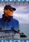 In The Wild - Grey Whales With Christopher Reeve [1995]