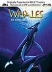 Whales - An Unforgettable Journey