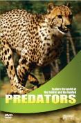 Wildlife - Predators