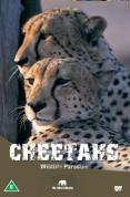 Wildlife Paradise - Cheetahs