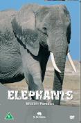 Wildlife Paradise - Elephants