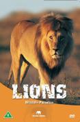 Wildlife Paradise - Lions
