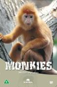 Wildlife Paradise - Monkeys