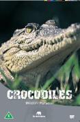 Wildlife Paradise - Crocodiles