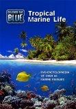 Discover The Blue - Tropical Marine Life
