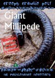 Creepy Crawlie Pets - Giant Millipede