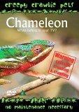 Creepy Crawlie Pets - Chameleon