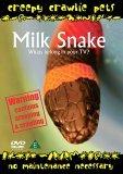 Creepy Crawlie Pets - Milk Snake
