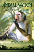 Animal Nation - My Favourite Monkey
