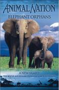 Animal Nation - Elephant Orphans