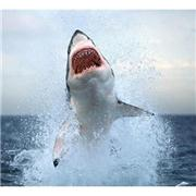 Shark Week [DVD]